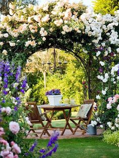 Gazebo with white climbing roses