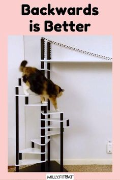Does your cat get enough exercise? Give kitty a boost with a set of Cat Stairs. The MillyFitcat Spiral Cat Tree was designed to keep your active pet entertained. The steps are spaced at the optimal height for your cat to have fun scampering up and down. A Cat Bed at the top offers kitty a place to hang out and relax. Cat Furniture can be functional and look good too. Click or Claw over to our Etsy Shop for a full description and available sizes. Meow! #cattree #catfurniture #cattower Cat Stairs, Tree Plan, Cat Activity, Cat Towers, Happy Animals, Cat Tree, Cat Furniture, Funny Animal Videos, Cat Memes