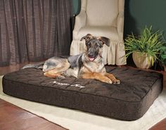 Orthopedic Dog bed, I hear these are the BEST and last the longest