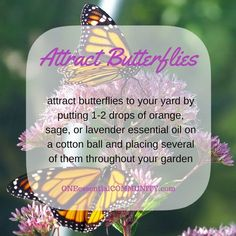 attract butterflies to your yard by putting 1-2 drops of orange, sage, or lavender essential oil on a cotton ball and placing several of them throughout your garden-- plus lots more ideas and tips for using essential oils