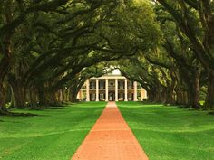 Oak Alley Plantation in Vacherie, Louisiana. The 28 beautiful live oak trees that lead to the plantation home are thought to be 300 years old!