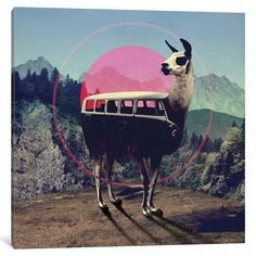 Shop for llama art from the world's greatest living artists. All llama artwork ships within 48 hours and includes a money-back guarantee. Choose your favorite llama designs and purchase them as wall art, home decor, phone cases, tote bags, and more! Psychedelic Art, Art Du Collage, Digital Collage, Photomontage, Ceci Est Une Pipe, Collages, Kunstjournal Inspiration, Llama Arts, Llama Llama