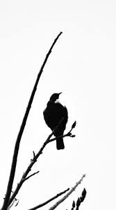 Image result for silhouette nz flax Stencils, Bird, Silhouettes, Animals, Inspiration, Image, Patterns, Biblical Inspiration, Block Prints