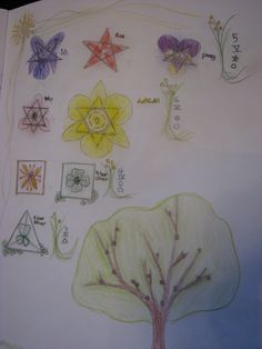 Flowers and geometry nature notebooking activity