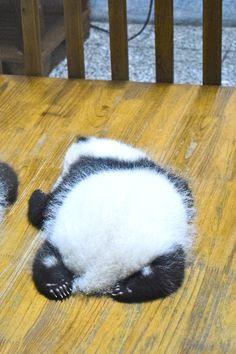 How to Cuddle a Panda in Chengdu, China #panda #chengdu #china