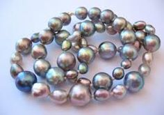 Image result for sea of cortez pearls