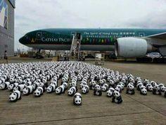 1600 Pandas on Tour HONG KONG by Paulo Grangeon