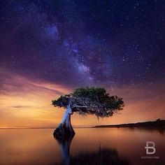 Stars sparkle over Blue Cypress Lake, Fellsmere, Florida. Photo courtesy of paulmarcellini via beautifuldestinations on Instagram.