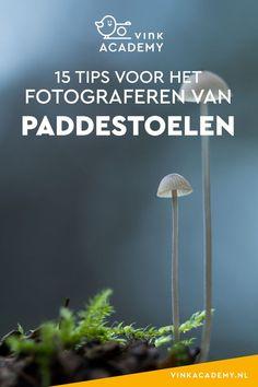 Paddestoelen fotograferen in de herfst: 15 tips #macrofotografie #natuurfotografie Ga In, Photography Lessons, Photoshop, Herbs, Inspiration, Terraces, Nikon, Passion, Art