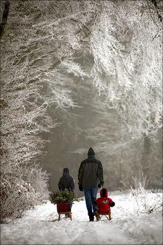 La forêt, c'est beau été comme hiver !