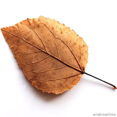 Dry leaf as art.dry leaf as art