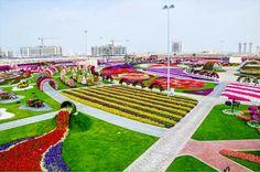 صور حديقة الزهور في دبي أكبر حديقة زهور في العالم