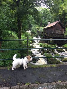 Rainy day by the mill - Charlie Photo: Karianne Ramstad
