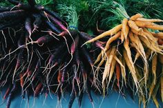 Carrot recipes - Four Root Farm, East Haddam, CT