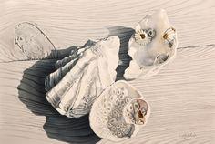 Mickie Acierno — I Heart Seashell Painting, Seashell Art, Starfish, Small Paintings, Large Painting, Realistic Drawings, Art Drawings, Beautiful Artwork, Painting Inspiration
