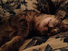 When your cat is the cutest thing ever!!!! My heart is melting! #Cat #happy #nap #cute