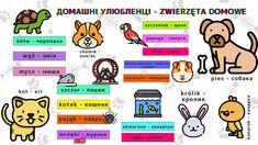 Тварини. Домашні улюбленці #polish #poland #foreignlanguage #language #languagelearning #польська #польский #польскийязык #польськамова #уроки #инфографика #слова #vsetutpl Poland, Comics, Comic Book, Comic Books, Comic, Comic Strips, Cartoons, Graphic Novels