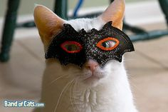 best halloween cats images | Cat Halloween Costumes for 2008 | Pictures of Cats - Band of Cats
