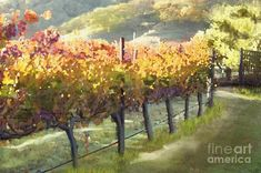 Love the Wine Country in California! -  New Series- California Vineyards: Morning in the Vineyard Fine Art Print