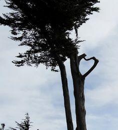 Loveheart in Golden Gate Park