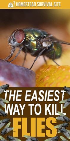 I have a new method that makes it incredibly easy to swat flies. It's so easy that it kind of takes the fun out of it. Homemade Fly Traps, Killing Flies, Wasp Repellent, Get Rid Of Flies, Mosquito Spray, Horse Fly, Homestead Survival, Survival Kits, Garden Pests