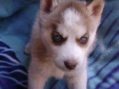 blue eyed cutie pie!