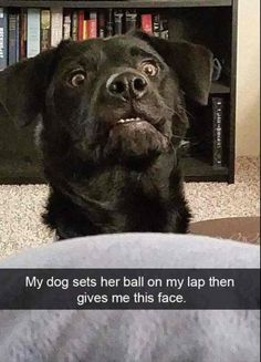 Funny Animal Picdump of the Day 175 photos) - Funny Dogs - Dog Memes Funny Dog Memes, Memes Br, Funny Animal Memes, Funny Cat Videos, Cute Funny Animals, Cute Baby Animals, Funny Cute, Funny Dogs, Hilarious