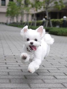 Here you'll find the cutest puppies in the world. If you love pets and you like puppies come and have a look, you will have fun with the occurrences of these cute little animals. Super Cute Puppies, Cute Baby Dogs, Cute Little Puppies, Cute Dogs And Puppies, Cute Little Animals, Cute Funny Animals, Pet Dogs, Pets, Tiny Puppies