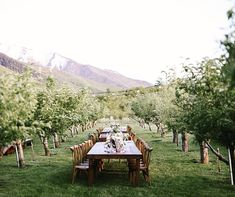 Wedding dinner in an orchard @mandinelson_