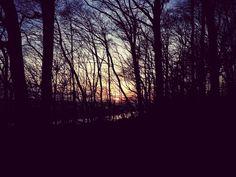 "9 Likes, 1 Comments - Sabine Quidnunc (@sabinequidnunc) on Instagram: ""#forestismyantidepressant #evening #spring"""
