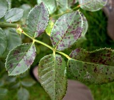Plant Leaves, Home And Garden, Gardening, Plants, Syrup, Lawn And Garden, Plant, Planets, Horticulture