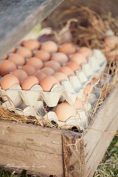 Eieren verzameld op de boerderij. Meer over kippen? Ga naar http://www.milkstory.nl/artikel/iedereen-aan-de-plofkip