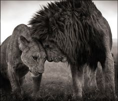 The king introduces his queen with gentle tenderness.