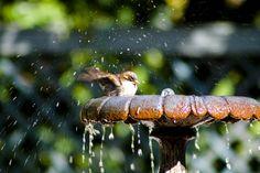 bird sanctuary birdbath backyard How to Turn Your Backyard Into a Bird Sanctuary