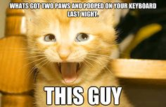 🤣 Funniest 🐶 Dogs and 😻 Cats-cat-kitten-Awesome Funny Animal Videos 😇Funny Animals-funny cat-dog Funny Animals With Captions, Funny Cat Photos, Funny Cats And Dogs, Cats And Kittens, Silly Cats, Cat Captions, Funny Pictures, Funny Cat Memes, Funny Animal Videos