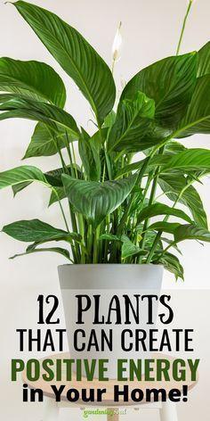 House Plants Decor, Plant Decor, Garden Plants, Inside Plants, Cool Plants, Household Plants, Best Indoor Plants, Bedroom Plants, Medicinal Plants