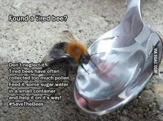 If the Bee Disappeared Off the Face of the Earth, Man Would Only Have Four Years Left To Live