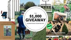 The $1,000 Homestead Starter Kit (GIVEAWAY)