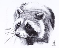 . Raccoon . by ~Maiwenn on deviantART
