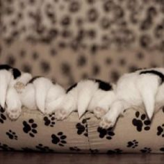 puppy butts!!!!!