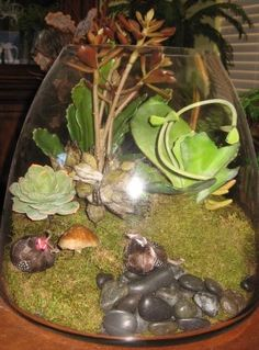 Succulents in terrarium by Susanne Litchfield Park, Artificial Succulents, Home Interior Design, Terrarium, Terrariums, Home Interiors