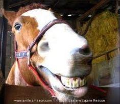 horse smile - Google Search