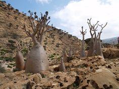 Остров Сокотра в Йемене (Socotra Island in Yemen)