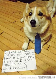 Gentleman Dog� http://buymelaughs.com/ Funny pics of Puppies #puppies #pics