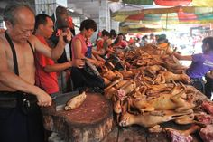 Millions sign petitions to call off China's dog meat festival | China | SOUTH EAST ASIA | ASIA: | Trans Asia News Service - Breaking News, Business News and All Latest News from Asian Prespective