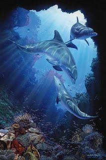 Коллекция картинок: Морские, часть 2 (дельфины, ракушки)