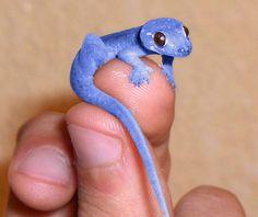 blue reptile