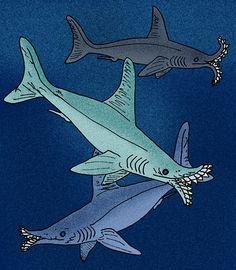 prehistoric sharks - Google Search