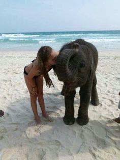 Swim with elephants in Thailand