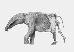 Sequential reconstruction of Gomphotherium angustidens by Marco Ansón Ramos